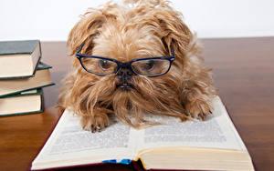 Fotos Hunde Buch Spitz Brille ein Tier