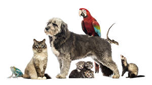 Wallpaper Dogs Cats Frogs Parrot Mustelidae White background Kittens Lizard animal