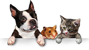 Bilder Hunde Katze Hausmeerschweinchen Weißer hintergrund Drei 3 Welpe Kätzchen Bulldogge Pfote Tiere