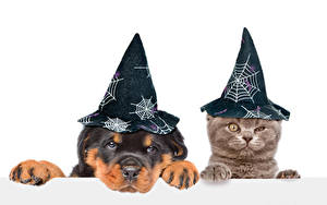Picture Dog Cat Halloween White background Puppy Kitty cat Two Hat Animals