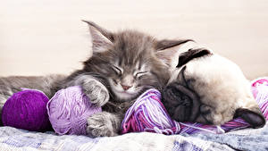 Pictures Dog Cats Puppies Kittens Pug Two Animals