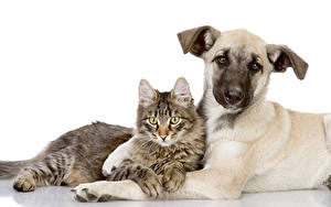 Bilder Hunde Katze 2 Shepherd Tiere