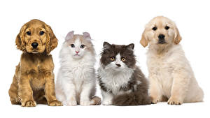 Wallpapers Dog Cats White background Puppy animal