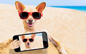 Bilder Hund Chihuahua Brille Strände Smartphone Selfie ein Tier