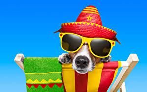 Hintergrundbilder Hund Farbigen hintergrund Jack Russell Terrier Brille Der Hut Schnauze Komische ein Tier