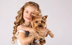 Hintergrundbilder Hunde Farbigen hintergrund Kleine Mädchen Yorkshire Terrier Starren Hand Kinder Tiere