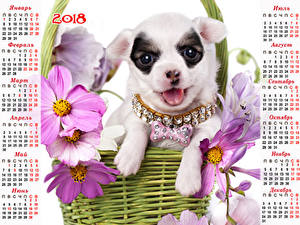 Fotos Hunde Schmuckkörbchen Schmuck Kalender 2018 Chihuahua Russische Tiere