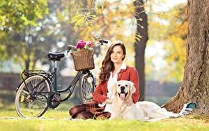 Hintergrundbilder Hunde Golden Retriever Fahrräder Weidenkorb Braunhaarige Gras Sitzt Bokeh junge frau