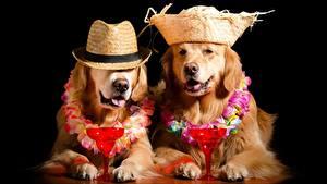 Hintergrundbilder Hund Golden Retriever Schwarzer Hintergrund Weinglas Lustiger