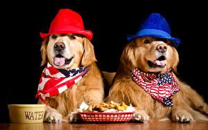 Hintergrundbilder Hunde Golden Retriever Schwarzer Hintergrund Zwei Der Hut Tiere