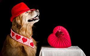 Bilder Hund Golden Retriever Der Hut Herz ein Tier