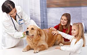 Bilder Hunde Golden Retriever Kleine Mädchen Lächeln Hand Kinder