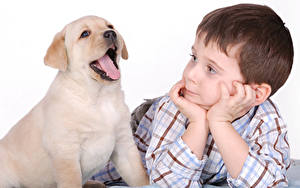 Bilder Hund Golden Retriever Weißer hintergrund Jungen Welpen Zunge Hand kind