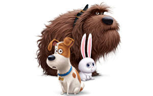Fotos Hund Hasen Weißer hintergrund The Secret Life of Pets 2016 Animationsfilm