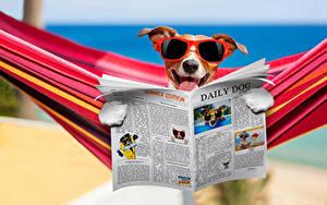 Fotos Hund Jack Russell Terrier Brille Zeitung Lustige Hängematte Tiere