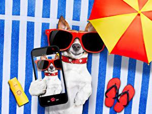 Fotos Hund Jack Russell Terrier Smartphone Brille Flipflop Selfie ein Tier