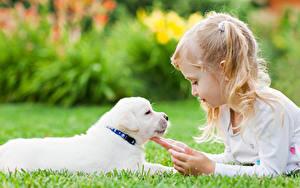 Hintergrundbilder Hunde Kleine Mädchen Welpen Hand kind