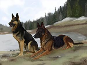 Bilder Hunde Gezeichnet Deutscher Schäferhund Zwei Shepherd