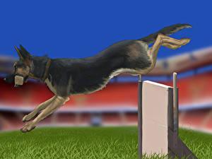 Hintergrundbilder Hunde Gezeichnet Deutscher Schäferhund Shepherd Laufsport Tiere