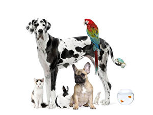 Wallpaper Dogs Parrot Cat Rabbit Cavy Dalmatian Bulldog animal