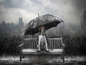 Hintergrundbilder Hunde Regen Regenschirm Sitzt Tiere