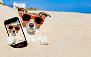 Bilder Hund Sand Jack Russell Terrier Brille Smartphone Selfie Lustige Tiere
