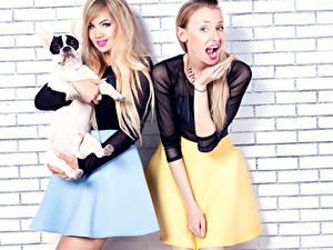 Fotos Hunde 2 Rock Mädchens