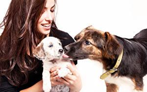 Bilder Hunde Weißer hintergrund Braune Haare Lächeln Welpe 2 ein Tier Mädchens
