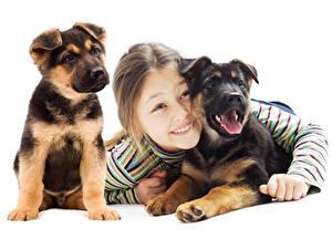 Bilder Hund Weißer hintergrund Kleine Mädchen Welpen Starren Tiere