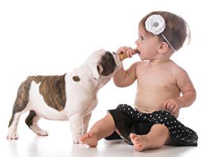 Hintergrundbilder Hunde Weißer hintergrund Kleine Mädchen Sitzend Welpen kind Tiere