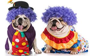 Picture Dogs White background Two Bulldog Hat Necktie Hair Clown Animals