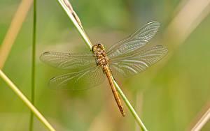 Bilder Libellen Insekten Hautnah Unscharfer Hintergrund ein Tier