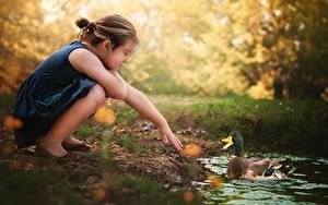 Fotos Entenvögel Kleine Mädchen Hand kind