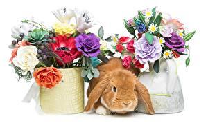 Fotos Ostern Sträuße Kaninchen