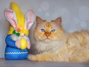 Hintergrundbilder Ostern Hauskatze Kaninchen Starren Eier Tiere