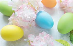 Hintergrundbilder Ostern Ei