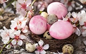 Fotos Ostern Eier Nest Blumen