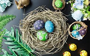 Hintergrundbilder Ostern Eier Nest