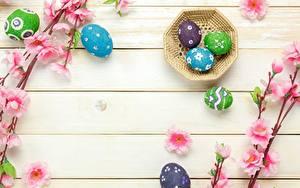 Fotos Ostern Eier Bretter Vorlage Grußkarte Ast