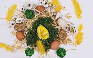 Hintergrundbilder Ostern Federn Chrysanthemen Grauer Hintergrund Stroh Ei