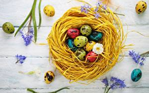 Hintergrundbilder Ostern Nest Ei Bunte