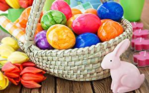 Fotos Ostern Kaninchen Tulpen Ei Weidenkorb Bunte