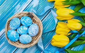 Fotos Ostern Tulpen Ei Nest Blüte
