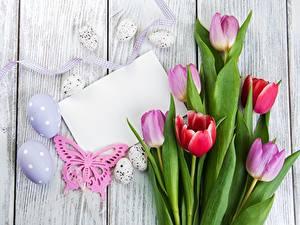Fotos Ostern Tulpen Ei Bretter Blatt Papier Vorlage Grußkarte Blumen