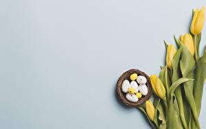 Hintergrundbilder Ostern Tulpen Grauer Hintergrund Gelb Eier Nest Vorlage Grußkarte Blüte Lebensmittel