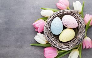 Bilder Ostern Tulpen Nest Eier Blüte