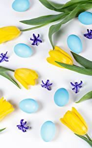 Fotos Ostern Tulpen Weißer hintergrund Gelb Ei Kronblätter Blumen