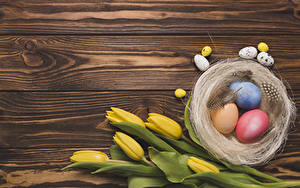 Fotos Ostern Tulpen Bretter Eier Gelb Nest Vorlage Grußkarte Blüte Lebensmittel