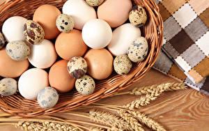 Bilder Ei Ähre Lebensmittel