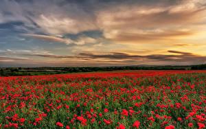 Hintergrundbilder England Felder Morgendämmerung und Sonnenuntergang Mohn Himmel County Durham